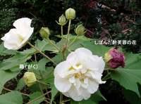 suifuyo1-50
